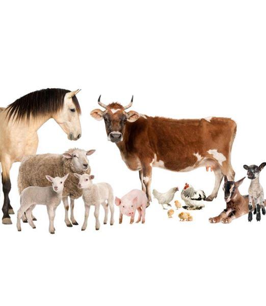 Immagine per la categoria Zootecnica